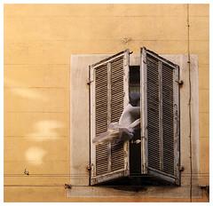 Mistral (1) (Marie Hacene) Tags: street vent marseille wind rue mur rideau panier mistral volet