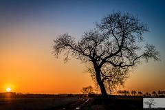 More From The Ridge (Rob Felton) Tags: nature silhouette sunrise bedford horizon scenic bedfordshire naturereserve vista felton wildlifetrust greensandridge robertfelton greensandridgewalk oldwardentunnel oldwardentunnelnaturereserve wildlifetrustforbedfordshirecambridgeshireandnorthamptonshire