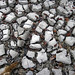 Mudcracks along the shoreline of Storr's Lake (San Salvador Island, Bahamas) 17