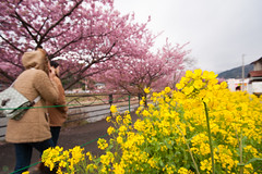 DS7_1526.jpg (d3_plus) Tags: street sea sky plant flower nature car rain japan drive spring scenery cloudy wideangle rainy  cherryblossom  sakura   shizuoka    touring  izu  kawasaki  superwideangle  kawazu          a05  kawazuzakura  1735mmf284 tamronspaf1735mmf284dildasphericalif tamronspaf1735mmf284dildaspherical d700  nikond700 tamronspaf1735mmf284dild tamronspaf1735mmf284 kawazucherryblossom tamronspaf1735mmf284dildasphericalifmodela05