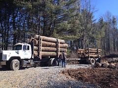 Logging begins!