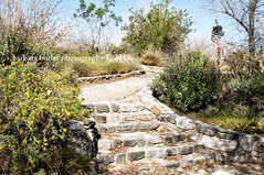 Stone Steps (RedHatGal: Barbara Butler/FireCreek Photography) Tags: mountains spring forsale exploring trail wildflowers grasslands stockimages kerncounty rocksteps windwolvespreserve redhatgal firecreekphotography barbarabutlerphotograhy