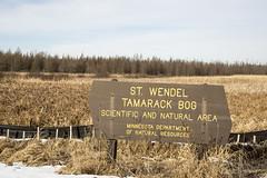 St. Wendel Tamarack Bog SNA (gamelaner) Tags: minnesota bog tamarack sna larixlaricina stwendel mndnr saintwendel scientificandnaturalarea stwendeltamarackbog