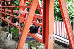 Today's Cat@2016-07-12 (masatsu) Tags: cat pentax catspotting mx1 thebiggestgroupwithonlycats