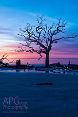 Hunting Tree (APGougePhotography) Tags: blue red beach colors clouds sunrise island coast sand nikon south hunting southcarolina carolina predawn beaufort boneyard d800 shiloette nikond800