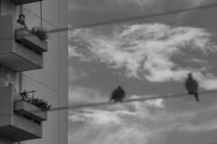 Una mirada (vallejojo15) Tags: 365 dias photo photos picture pictures pic pics art beautiful exposure composition composicion focus capture moment instant bn bnw blancoynegro blackandwhite noise ruido ruidodigital digitalnoise people personas life vida rain reflection lluvia reflejo water agua fotografia photographer photography fotografo streetphotography fotografiacallejera nikon nikond5300 teamnikon nikonistas nikonians nikkor1855mm 1855mm nikkor55200mm 55200mm blanco y negro monocromtico aire libre 365dias proyecto365dias