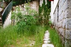 Strade abbandonate (michele.palombi) Tags: calabria camigliatello kodak gold 200