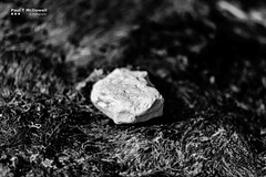 rock on weed (Paul T McDowell Photography) Tags: 2016 ballintoy blackandwhitephotography bright camera canonef85mmf18usm canoneos5dmarkii cloudy colour countyantrim day fineartphotography hiking horizontal image landscapephotographer lens northernireland orientation outdoor paultmcdowell paultmcdowellphotography people photography places season summer time unitedkingdom weather year