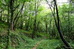 The forest of the dancing butterflies    /  La foresta delle farfalle danzanti (IVAN 63) Tags: forest butterfly the thebutterflyforest orestof