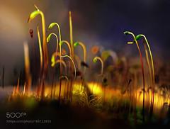 Sottobosco (l3v1k) Tags: ifttt 500px macro natura erba sottobosco vegetazione boccioli