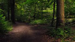 Forest Path (Netsrak) Tags: forest wald forst woods tree trees baum bume path way weg waldweg light shadow licht schatten outdoor nature natur eifel leaf leaves blatt bltter grn green nikon d3200