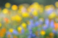 Flower Bed DSC0555 (KWsideB) Tags: flowerbed flowers sakuranoyamapark sakuranoyama  narita airport  chibaprefecture park japan  impressionist blurred blurry colours colorful softfocus abstract