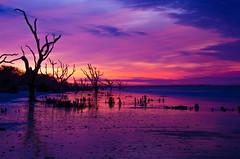 Edisto Sunrise (Jon Ariel) Tags: botany bay sc edisto driftwood trees south carolina sunrise beach ocean sea