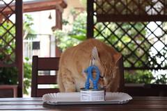 Buon Compleanno Leo 005 (Emiliano D' Astolto) Tags: gatto compleanno animalidomestici leo giardino cat pet