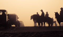 Land Cruisers and Horses in the Sea of Sand ('Barnaby') Tags: tenggermassif olympus omd east segarawedi wwwbarnabyrobsonorg malang indonesia southeastasia travelling barnabyrobson em5 bromo travel lautanpasir asia seaofsand eastjava