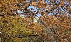 Chteau d'Esparron (A.G. Photographie (+ 100 000 vues)) Tags: chteau automne arbre esparrondeverdon nikon d5000 sigma
