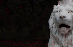 Imposing (Martin Snicer Photography) Tags: royalbotanicgardens sydney australia sculpture lion white imposing art artistic 50mm