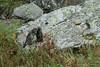 1O9A9660 (lollus) Tags: marmots