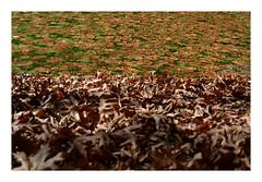 DSC_0271 (mia_alexiou) Tags: river october autumn nature colours leaves ioannina zagori miaalexiou