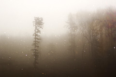 Isolated. (Carina Aurora in Wonderland) Tags: isolated woods forest fog foggy autumn fall wanderlust travel explore stars magical mystical mystic mystery melancholia canon