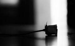 Last chance (hector_cbs) Tags: black white rose blackandwhite conceptual rosa bw bn blancoynegro byn