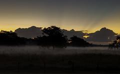 Foggy Morning (Scott Sanford) Tags: fog morning sunrise sunlight nature landscape naturallight naturalbeauty texas dark lowlight canon eos ef2470mmf28lusm 6d topazlabs sunrays