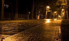 Silent Nights (--Conrad-N--) Tags: kurort bad saarow kurpark reflection rain autumn a7rm2 park nacht night late hour