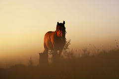 Dreams (Dejan Hudoletnjak) Tags: horse dreams quote landscape nature freedom animal horses brown wild natural horsephotography animalphotohraphy soft