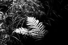 black & white - 4 (alice.decoorebyter) Tags: naturalworld naturephotograph naturepics nature beautiful beauty beautyinnature
