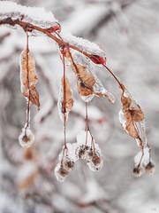 Eisregen 7 (*altglas*) Tags: winter ice eis eisregen frozenrain