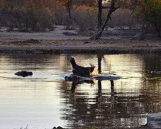 Botswana Hunting Safari 33