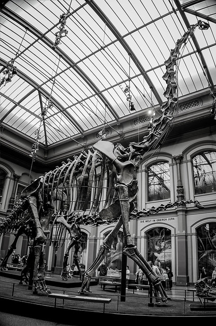 Robert Emmerich - 46 B+W The Giraffatitan Dino at the Museum of Natural Science in Berlin - Germany