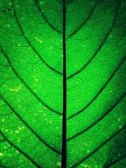 Abstraction (joaobambu) Tags: plant color macro verde green planta nature topv111 closeup ilovenature leaf topv333 natureza stock symetry folha dao gruen taoist verte taoism laotzu taoteching