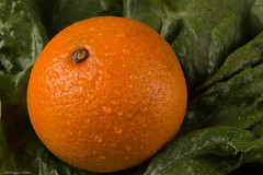 Orange (McDaiquri) Tags: stilllife food orange fruit foodporn citrus oranges freshfruit foodphotography stilllifephotography