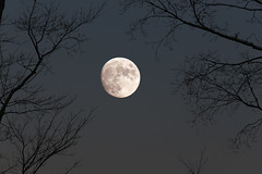 Full Moon (Dave Trono) Tags: nightphotography trees moon fall canon newengland newhampshire nh fullmoon astronomy nightsky 2014 flickrexplore canoneos6d davetrono