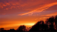 Colorful sunset (Foto Martien) Tags: park november light sunset red holland netherlands colors dutch yellow atardecer evening licht photo zonsondergang colorful tramonto afternoon foto sonnenuntergang purple sundown dusk arnhem picture nederland prdosol even dmmerung avond geotag  ocaso  schemering a77 gelderland puestadelsol gnbatm  coucherdusoleil  betuwe   geotagging schemer namiddag zpadslunce zachdsoca immerloopark zwielicht matahariterbenam arnhemzuid   silhouettestrees martienuiterweerd martienarnhem fotomartien slta77v a77v sonyalpha77 geotaggedwithgps tamron70300mmf456sp silhouettenbomen lcmttriln