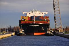 MSC New York (larry_antwerp) Tags: haven port lock antwerp berendrecht mediterraneanshipping berendrechtsluis mscnewyork 9606314