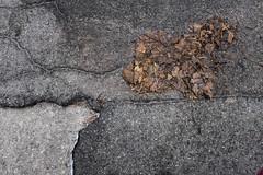 continental drift-0309 (blairware) Tags: leaves concrete border gutter asphalt