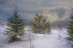 Snowing (Lindaw9) Tags: trees winter sky ontario clouds snowing february northern impression topaz
