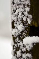 Copos de nieve (Maria_R_S) Tags: winter white snow tree landscape spain scenery nieve paisaje invierno bizkaia euskalherria euskal herria paisaia negua