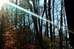 063_Fotor (ashlyn.maria) Tags: christmas wood blue trees winter light sunset sky sun white hot tree green fall beauty yellow early big amazing cool woods day skies glare bright north carolina huge tall lots