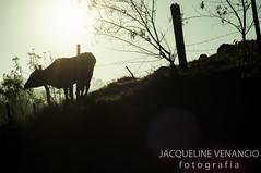 New day, for new year (Jack Venancio) Tags: flores interior jardin jardim viagem fogo cachoeira vaca joopaulo pavo lareira picoagudo santoantoniodopinhal solnascer