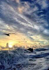 Mojo Risin' (Andy Royston / Ft Lauderdale Sun) Tags: photostream
