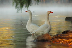 Conociendo el entorno. (Marco Wence) Tags: naturaleza lake maana nature water fauna landscape lago agua ducks surreal fav patos camcuaro instantfav tanganccuaro lagosdemichoacn camcuaromichoacn mexicanlakes marcowence recorriendomichoacn