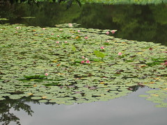 Zen Tranquility