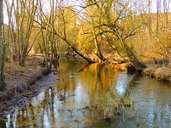 die Schwartau (Sophia-Fatima) Tags: winter river deutschland fluss schleswigholstein badschwartau schwartau