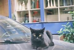 Black cat look ! (mertcanyucel) Tags: analog blackcat eyes 200asa istanbul exa1a