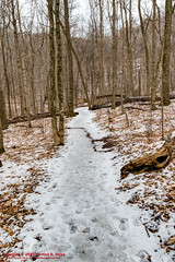 Ganier Ridge Trail (mikerhicks) Tags: winter usa ice landscape geotagged unitedstates nashville hiking tennessee phillips hdr photomatix tennesseestateparks radnorlakestatepark radnorlakestatenaturalarea oakhillestates canon7dmkii sigma18250mmf3563dcmacrooshsm geo:lat=3606439333 geo:lon=8679447667