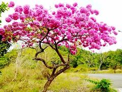 Flowers Trees at 實踐大學高雄校區