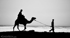 Riding shadows (Diego.Juliano) Tags: portrait blackandwhite bw man male silhouette pessoa desert retrato egypt pb riding camel guide pulling homem pretoebranco egito deserto montando camelo guia guiding silhueta puxando misr guiando  luzesombra